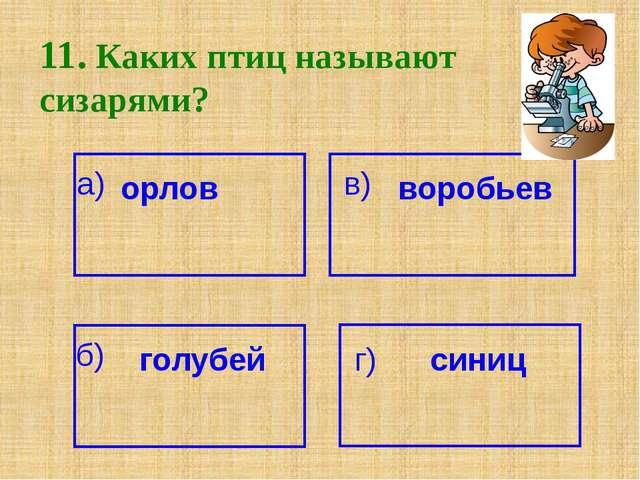 11. Каких птиц называют сизарями? а) орлов воробьев в) б) голубей г) синиц