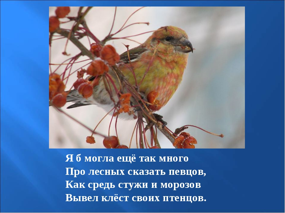 Я б могла ещё так много Про лесных сказать певцов, Как средь стужи и морозов...