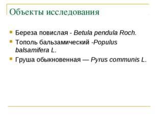 Объекты исследования Береза повислая - Betula pendula Roch. Тополь бальзамиче
