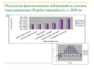 Результаты фенологических наблюдений за тополем бальзамическим (Populus balsa