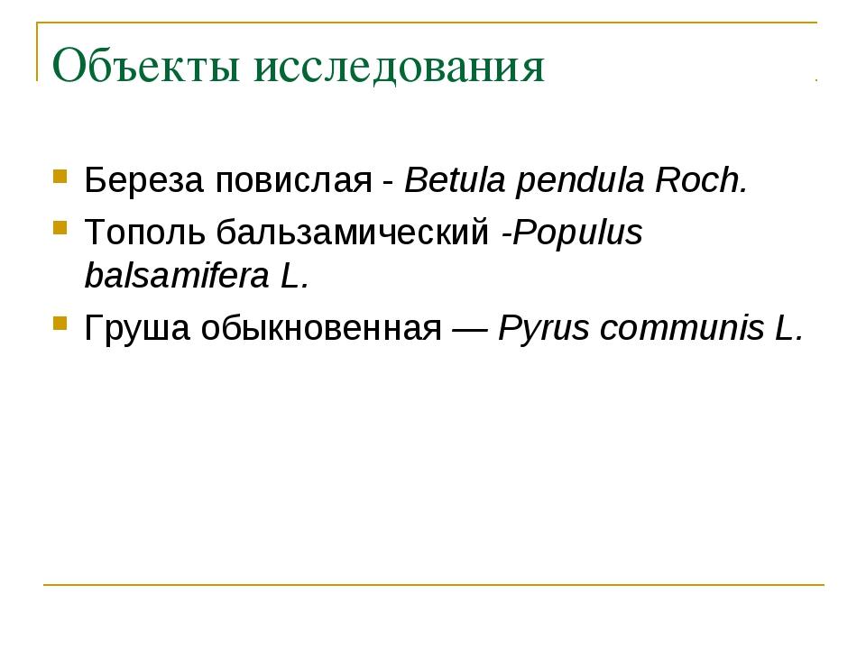 Объекты исследования Береза повислая - Betula pendula Roch. Тополь бальзамиче...