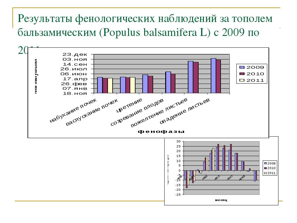 Результаты фенологических наблюдений за тополем бальзамическим (Populus balsa...