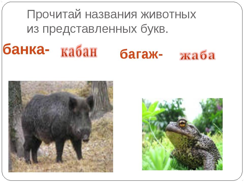 Прочитай названия животных из представленных букв. банка- багаж-