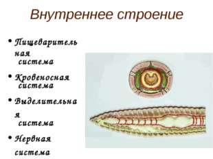 Внутреннее строение Пищеварительная система Кровеносная система Выделительная