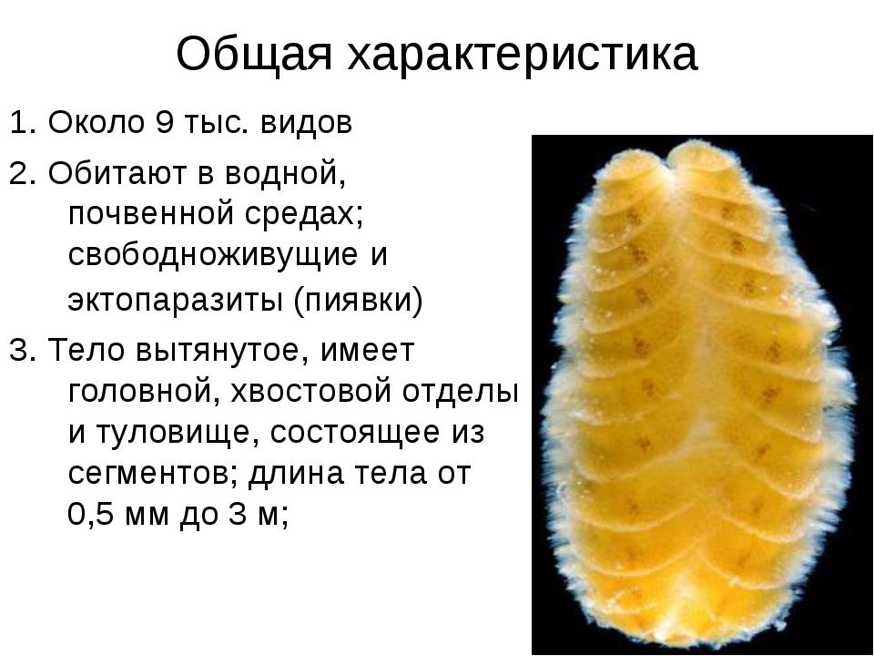 Общая характеристика 1. Около 9 тыс. видов 2. Обитают в водной, почвенной сре...