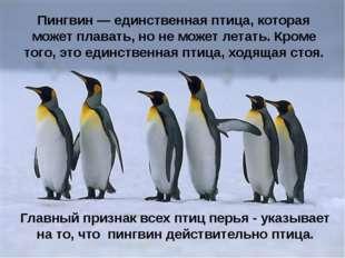 Пингвин — единственная птица, которая может плавать, но не может летать. Кром