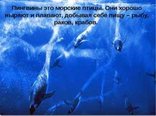 Пингвины это морские птицы. Они хорошо ныряют и плавают, добывая себе пищу –