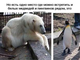 Но есть одно место где можно встретить и белых медведей и пингвинов рядом, эт