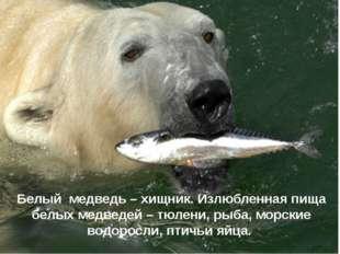 Белый медведь – хищник. Излюбленная пища белых медведей – тюлени, рыба, морс