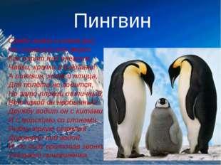 Пингвин Среди льдин и снега рос, Не страшит его мороз. Как парят над океаном