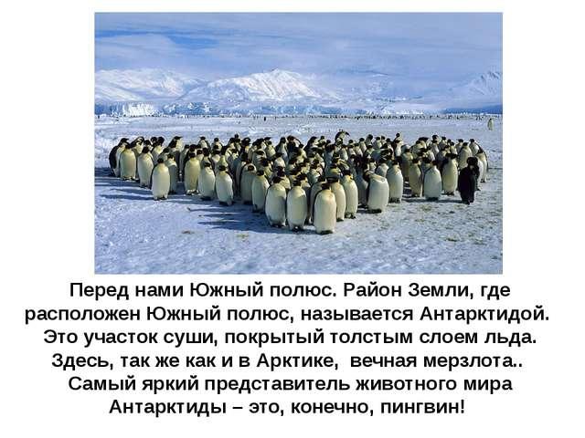 Перед нами Южный полюс. Район Земли, где расположен Южный полюс, называется А...