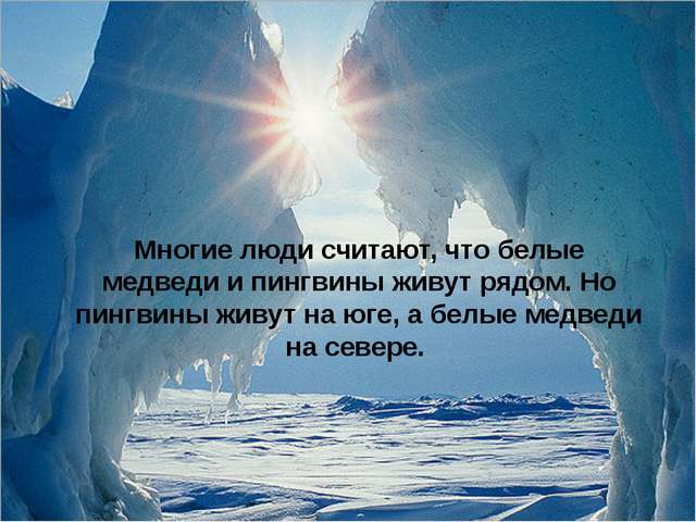 Многие люди считают, что белые медведи и пингвины живут рядом. Но пингвины жи...