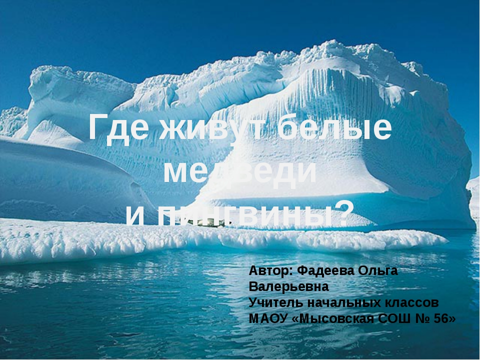 Где живут белые медведи и пингвины? Автор: Фадеева Ольга Валерьевна Учитель н...