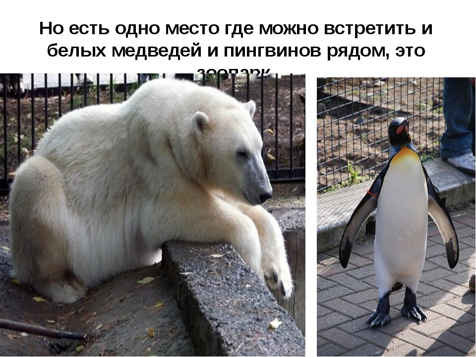 Но есть одно место где можно встретить и белых медведей и пингвинов рядом, эт...