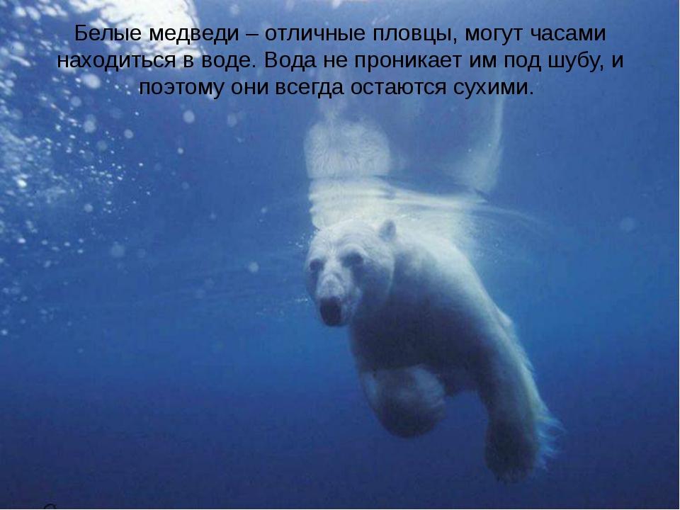 Белые медведи – отличные пловцы, могут часами находиться в воде. Вода не прон...