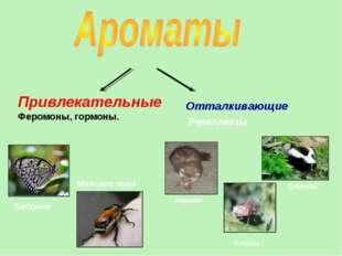 Привлекательные Феромоны, гормоны. Бабочки Майские жуки Хорьки Клопы Скунсы О