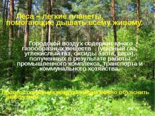 Леса – легкие планеты, помогающие дышать всему живому. Городской воздух соде