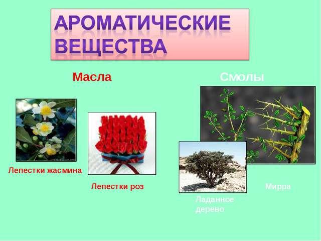 Масла Смолы Лепестки жасмина Лепестки роз Мирра Ладанное дерево