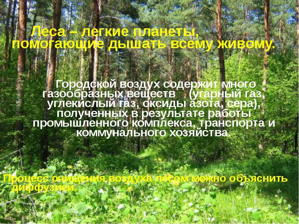 Леса – легкие планеты, помогающие дышать всему живому. Городской воздух соде...