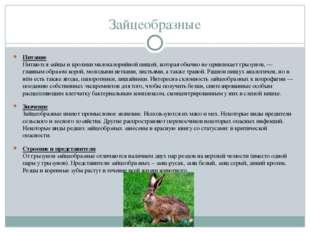 Зайцеобразные Питание Питаются зайцы и кролики малокалорийной пищей, которая