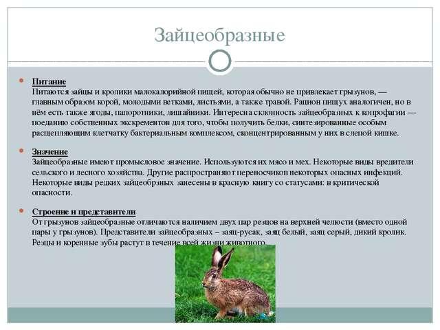 Зайцеобразные Питание Питаются зайцы и кролики малокалорийной пищей, которая...