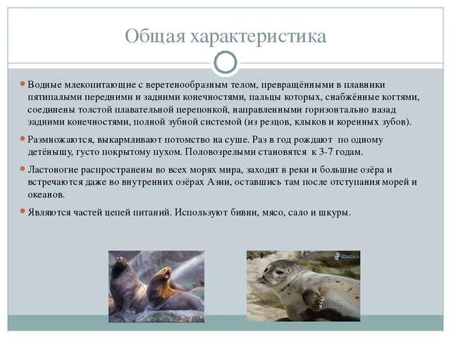 Общая характеристика Водные млекопитающие с веретенообразным телом, превращён...