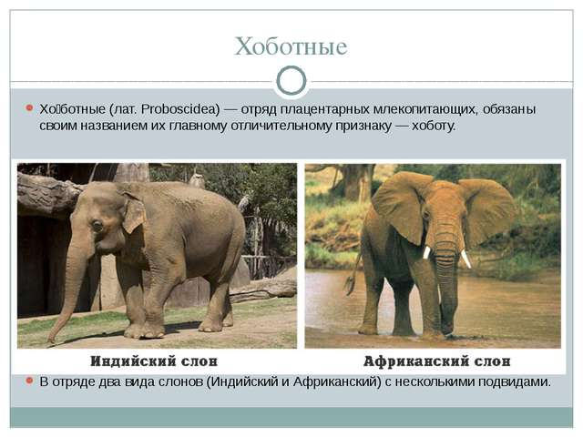 Хоботные Хо́ботные(лат.Proboscidea)— отряд плацентарныхмлекопитающих, обя...
