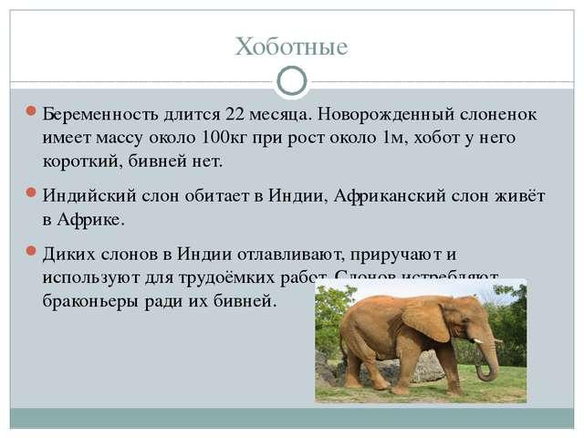 Хоботные Беременность длится 22 месяца. Новорожденный слоненок имеет массу ок...