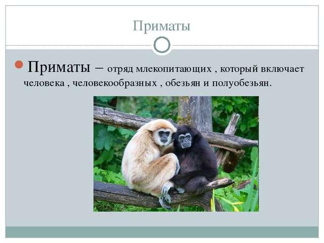 Приматы Приматы – отряд млекопитающих , который включает человека , человекоо...
