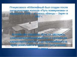 Птицесовхоз «Юбилейный был создан после реорганизации колхоза «Путь коммунизм