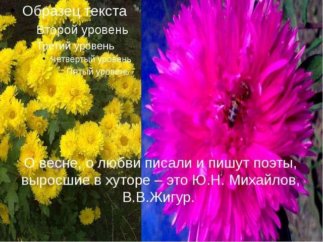 О весне, о любви писали и пишут поэты, выросшие в хуторе – это Ю.Н. Михайлов,...