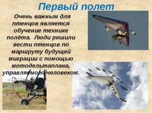 Первый полет Очень важным для птенцов является обучение технике полёта. Люди