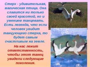 Стерх - удивительная, магическая птица. Она славится ни только своей красотой
