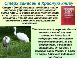 Стерх занесен в Красную книгу Стерх - белый журавль, входит в число наиболее