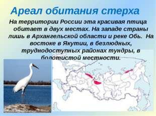Ареал обитания стерха На территории России эта красивая птица обитает в двух