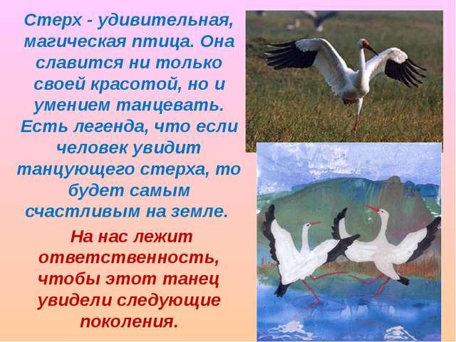 Стерх - удивительная, магическая птица. Она славится ни только своей красотой...