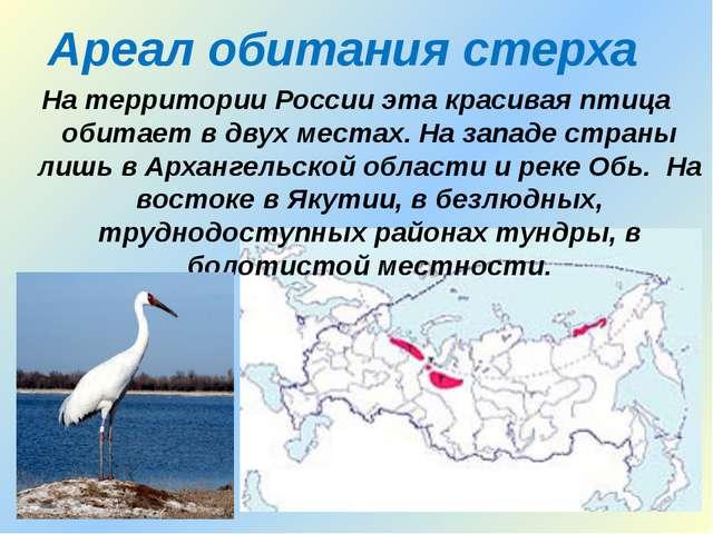 Ареал обитания стерха На территории России эта красивая птица обитает в двух...