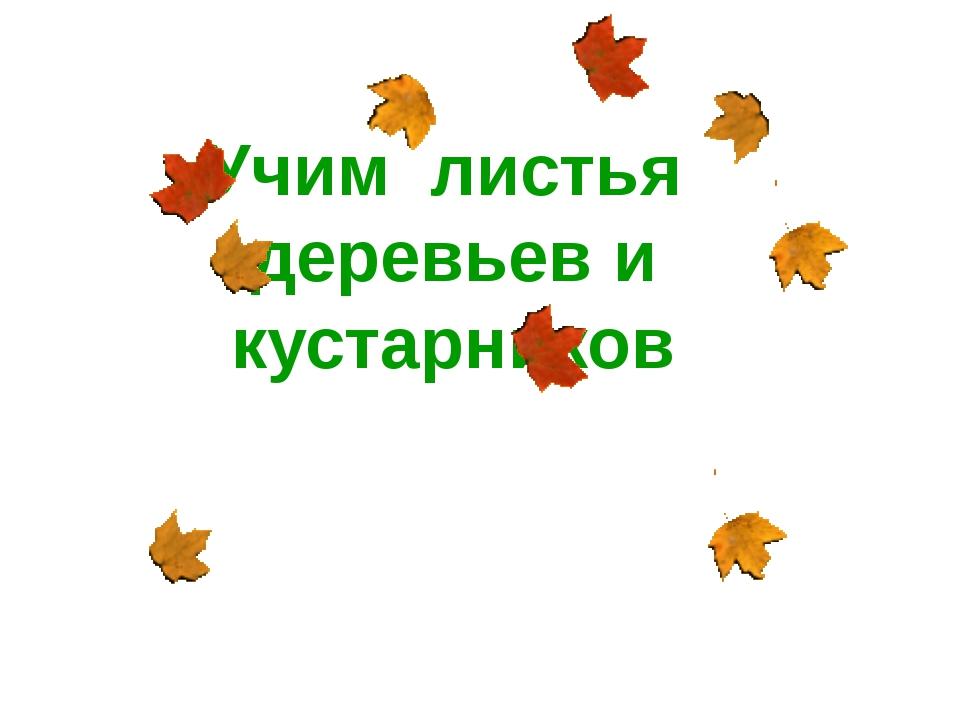Учим листья деревьев и кустарников