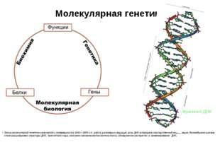 Молекулярная генетика Эпоха молекулярной генетики начинается с появившихся в