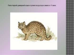 Лапы первой домашней кошки ступили на русскую землю в 11 веке.