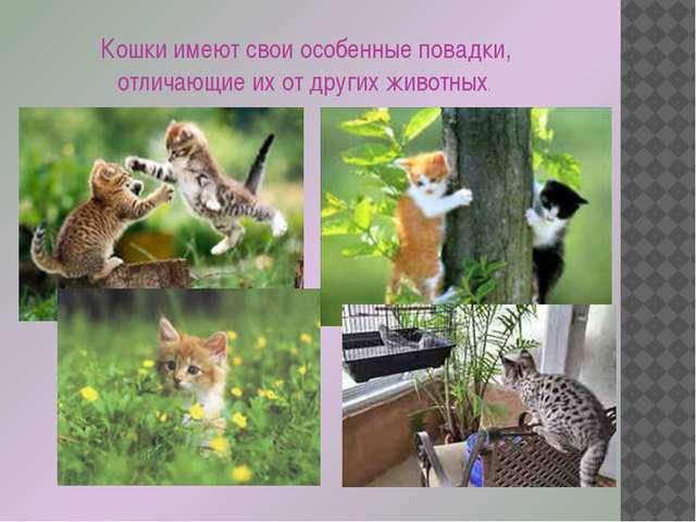 Кошки имеют свои особенные повадки, отличающие их от других животных.