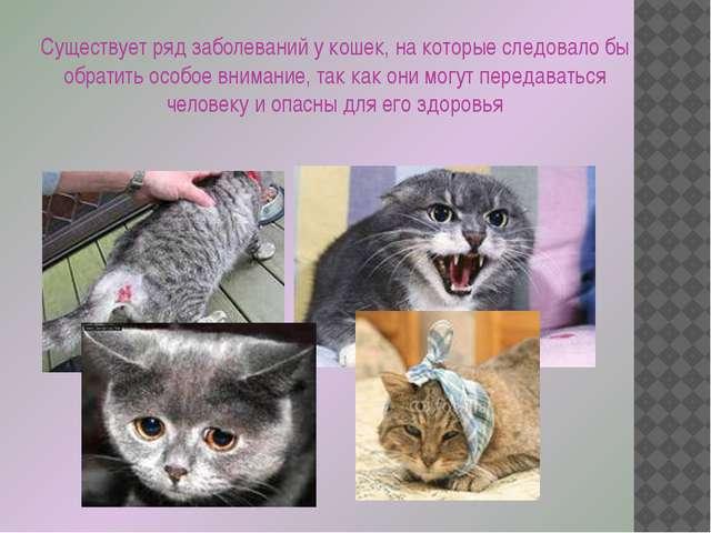 Существует ряд заболеваний у кошек, на которые следовало бы обратить особое в...