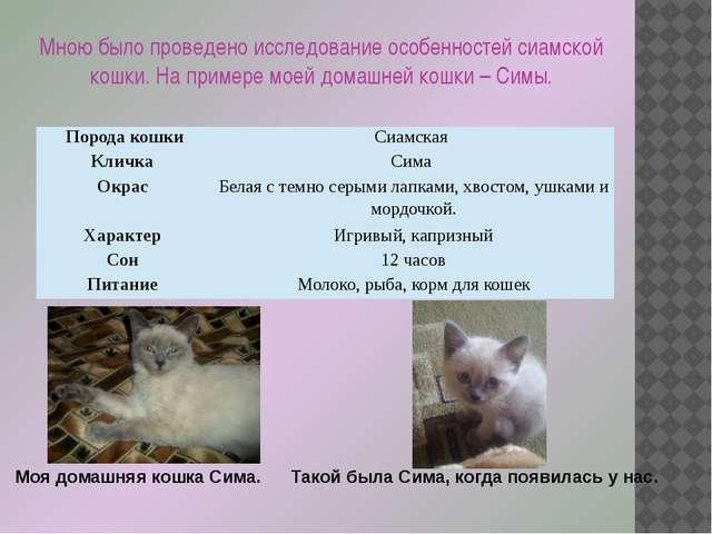 Мною было проведено исследование особенностей сиамской кошки. На примере моей...