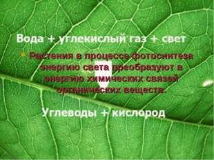 Растения в процессе фотосинтеза энергию света преобразуют в энергию химически