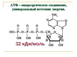 АТФ – макроэргическое соединение, универсальный источник энергии. 32 кДж/моль