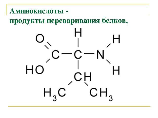 Аминокислоты - продукты переваривания белков,
