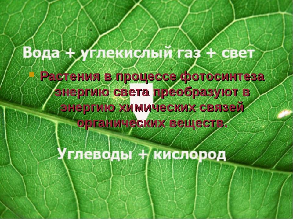 Растения в процессе фотосинтеза энергию света преобразуют в энергию химически...