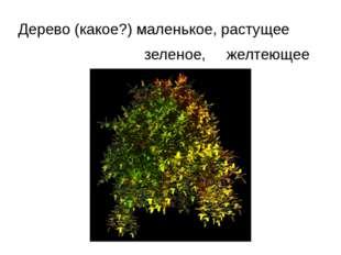 Дерево (какое?) маленькое, растущее зеленое, желтеющее