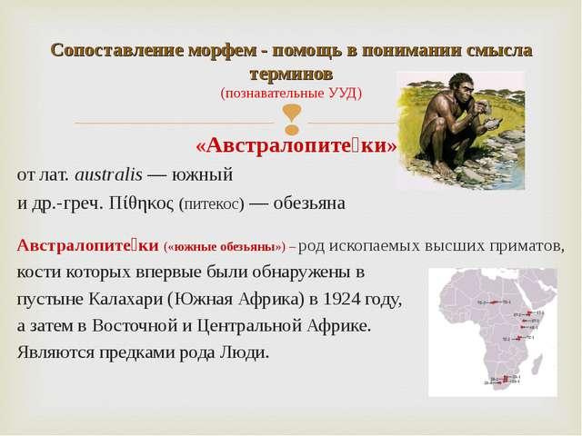 «Австралопите́ки» отлат.australis— южный идр.-греч.Πίθηκος (питекос)— о...
