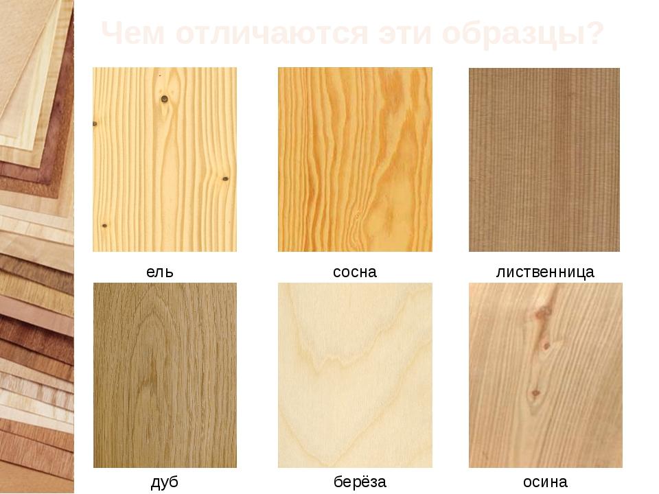 Чем отличаются эти образцы? ель сосна лиственница дуб берёза осина